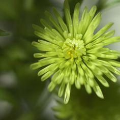 Beautiful green flower colour match #Petals #Nature #Spring