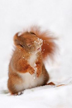 Squirrel in the cold winter snow ❥