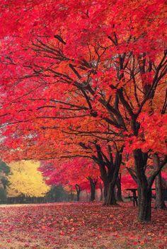 Red Fall༺ ♠ ༻*ŦƶȠ*༺ ♠ ༻