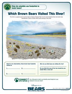 Which Brown Bear Visited This River?