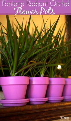 Easy spring home decor - Pantone Radiant Orchid flower pots via momendeavors.com