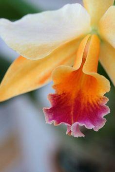 color palettes, flowers garden