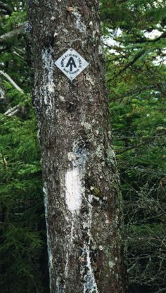 An Appalachian Trail Thru Hike in Pictures