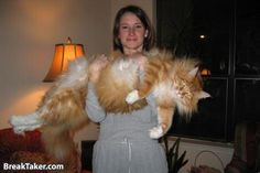 Big Cat! home fitness, animals, kitten, big cats, california, family gifts, victoria secret, original gifts, families
