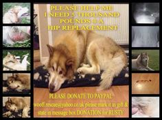 Rusty #urgent #fundsneeded #surgery @MalamuteMatters #neglected #suffering #hipreplacement £5k #donate #SaveALife pic.twitter.com/1Z3veme8Gb