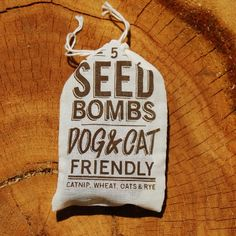 For Furry Friends: Grow Your Own Cat Treats