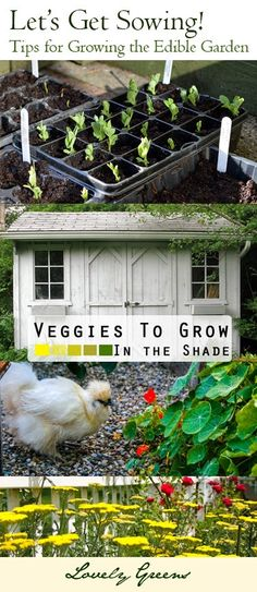 Gardening plans and tips that consider your individual needs and situation - compiled by the Garden Charmers blog network. ~ Some fantastic ideas including companion planting, permaculture, square foot gardening, a garden planning computer app, and more!
