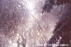 The Ice Storm ice storm, pin, ici tree