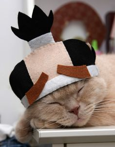 Samurai hat for cat