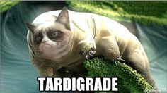 tardigrade project plush tardigrade pinterest