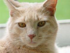 CatNutrition.org - Raw Cat Food Recipes