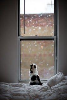 Kitten in Wonderment