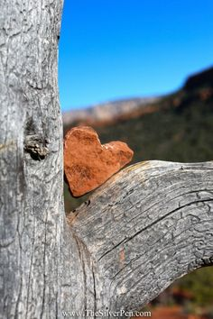 A tree full of heart rocks at Mii Amo Spa - Sedona, Arizona