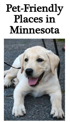 pet friendly places in minnesota