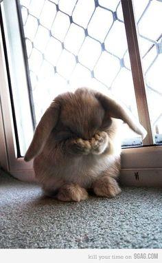Hide and seek bunny! <3