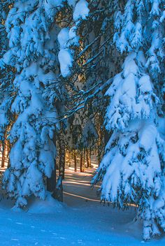 Beautiful winter forest, Grand Mesa, Colorado
