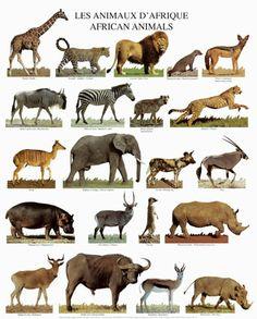 Les animaux d'Afrique