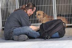 animals, animal shelters, reunit, dogs, anim interest, dog turn, dog life, friend, anim stori