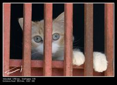 Aquí hay gato encerrado: there's something fishy, something's up