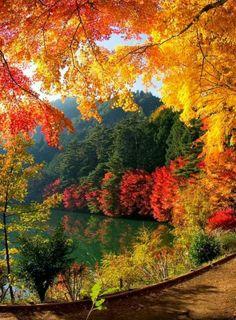 take a fall foliage trip back east