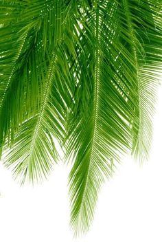 I <3 palms!