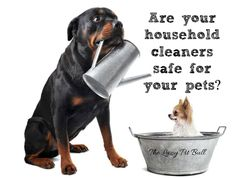 Are Your Household Cleaners Safe For Your Pets?