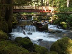 Five great bridge hikes (with bridges worked on by WTA volunteers!) Photo of Lower Big Quilcene by Trip Reporter Nutmeg. #hiking #rivers #spring #winter