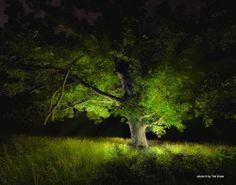 Arkansas - Tim Ernst Photography