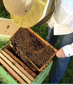 Have you ever experienced of keeping honey bees in your backyard? Here're 10 useful tips for     starting beekeeping.