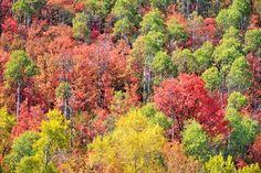 5 Best Fall Hikes In Utah