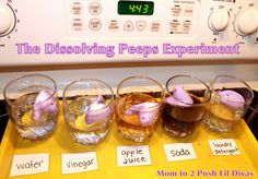 Dissolving Peep experiment, fun to do at Halloween with Peep ghosts as part of Yucky Science week I'm doing this year!