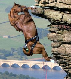 Rock Climbing Horse?