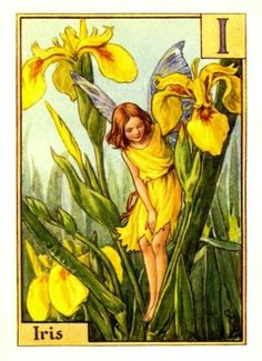cice mari, mari barker, flowerfairi, irises, alphabet, flowers, flower fairies, cicely mary barker, print