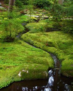 Bloedel Reserve: The Moss Garden
