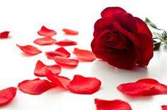 Drop The Rose Petals