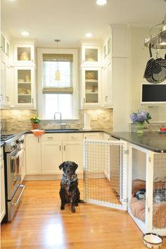Solve the problem of storing the dog crate. Dog crate under kitchen counter/island.