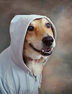 all dogs look cool in hoodies