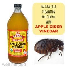 Natural Flea Prevention and Control with Apple Cider Vinegar. ACV image source: bragg.com. Flea image source: wkanimalhospital.com natur flea, apple cider vinegar, flea prevent