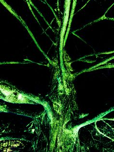 """""""Giant Squid Tree"""" (2012)"""