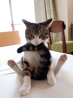 HA! Cat yoga :D