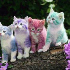 Lisa Frank Kitties?