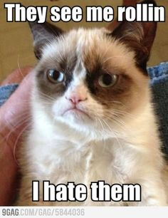 Grumpy cat is not amused