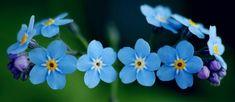 Graceful Little Blue Flower Spring Facebook Timeline Photo