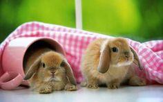 Conejos, No son tiernos?