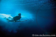 underwater photography by Tim McKenna