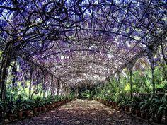 Jardin Botanico de Malaga, Andalusia, Spain