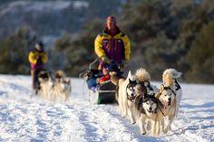 Dogsledding/Mushing in the Rockies