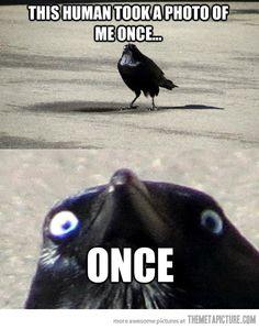 Insanity Crow…