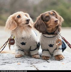 Two Adorable Dachshunds • APlaceToLoveDogs.com • dog dogs puppy puppies cute doggy doggies adorable funny fun silly photography