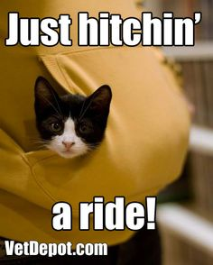 Hitchin' a ride cat